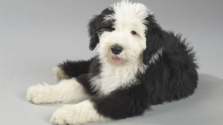 Puppy Training – How's & When's
