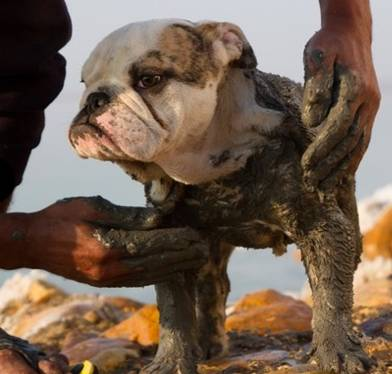 Mud Spa Chien Chic Hereford Luxury Grooming