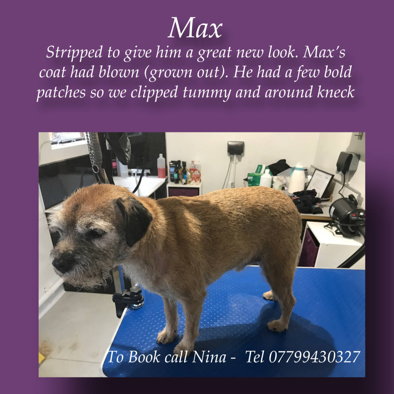 Max-stripped.jpg