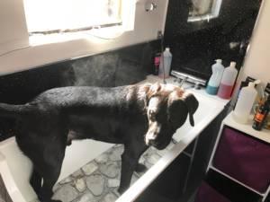 Chien Chic Dog Baths