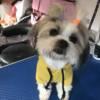 Yellow pooch Hoodie Sweatshirt