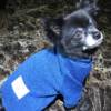 Dog-Blue-designer-sweater