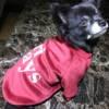 Red Velvet Dog Jumper