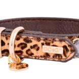 Dog-Safari-Collar-.jpeg
