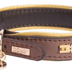brown gold collar dog
