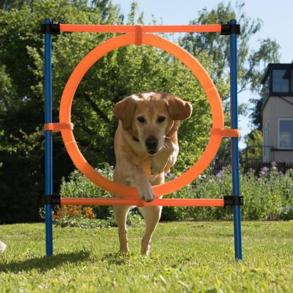 Agility Hoop Jump