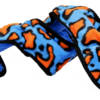PJ1620 IMMORTALS 5 Squeak Blue Orange Snake